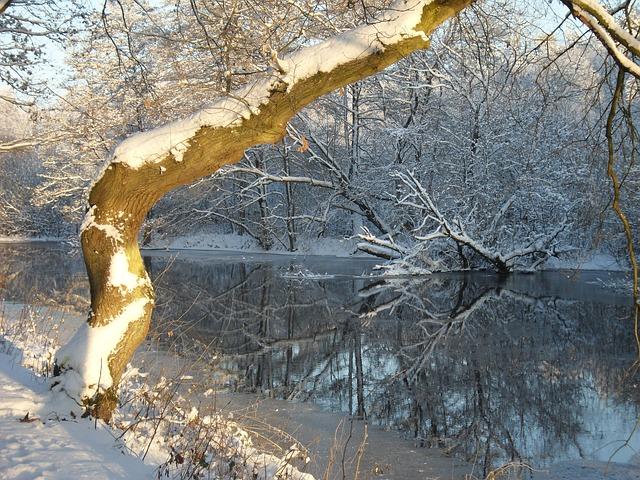 mise-en-miroir-de-la-neige-belle-riviere-gelee-hiver-arbre_121-74619